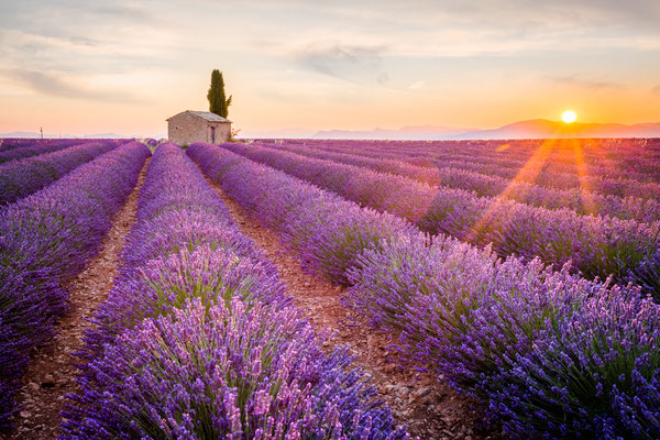 Provence France - Lavender Fields