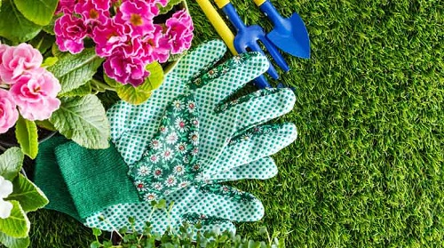 Summer Lawn and Landscape Care