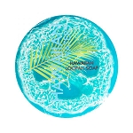 Hawaiian Waters Loofah Soap - Sea Salt & Kukui Oil - Pure Hawaiian Soap - 4.7oz